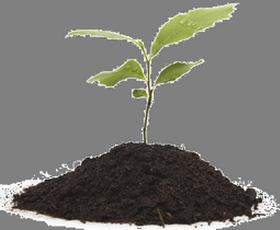 Почва, удобрения